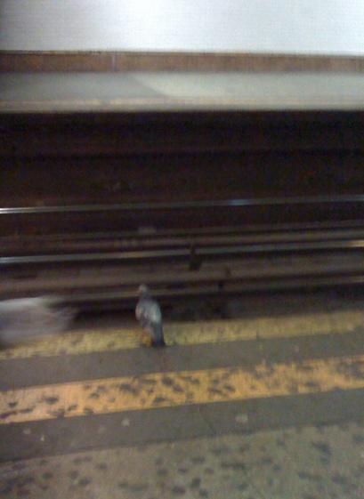 pigeon-sub.jpg